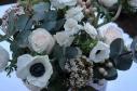 anemone eucalyptus blanc rose
